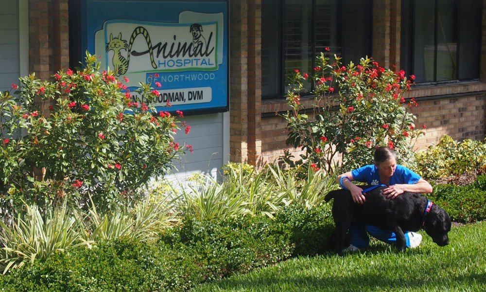 A team member playing with a dog that is boarding at Animal Hospital of Northwood