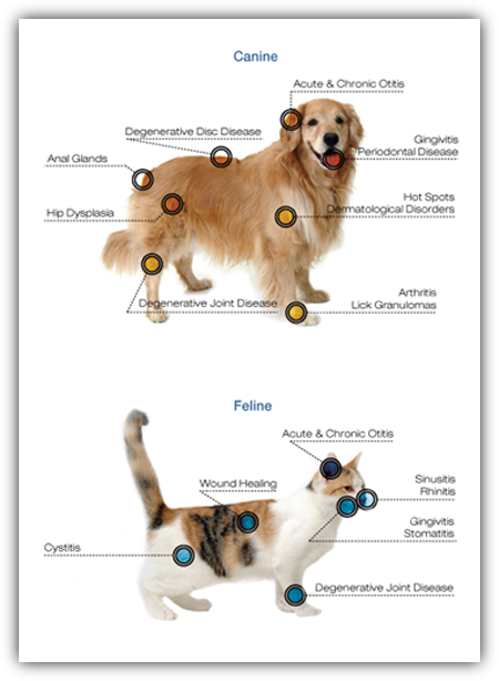An infograph showing where dogs and cats would get laser therapy